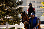MAY13, 2021:  Concert Tour heads to the track for a gallop before the Preakness Stakes at  Pimlico Race Course in Baltimore, Maryland on May 13, 2021. EversEclipse Sportswire/CSM
