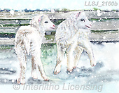 Sinead, CHRISTMAS ANIMALS, WEIHNACHTEN TIERE, NAVIDAD ANIMALES, paintings+++++,LLSJ2160B,#xa# .sheep,sheeps