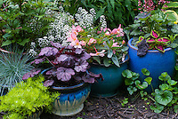 Container gardens pots, Festuca blue grass, blue pots, Alyssum Lobularia, purple Heuchera Grape Expecations, yellow Sedum, Coleus, Begonia in flower, matching colors of planters