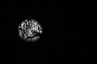 The gibbous moon behind a web of branches.