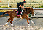 January 22, 2021: Code of Honor exercises as horses prepare for the 2021 Pegasus World Cup Invitational at Gulfstream Park in Hallandale Beach, Florida. Scott Serio/Eclipse Sportswire/CSM