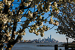 Spring pops up during cold temperatures in New York
