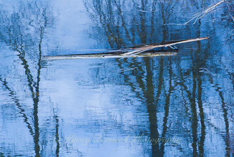 """""""MOODY BLUE""""<br /> <br /> Log seemingly floating in the tree tops a juxtaposition of reality and illusion. nature is the consummate artist using water as her canvas. ORIGINAL 24 X 36 GALLERY WRAPPED CANVAS SIGNED BY THE ARTIST $2,500. CONTACT FOR AVAILABILITY."""