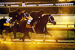 Stay Thirsty, trained by Todd Pletcher and to be ridden by Javier Castellano , exercises in preparation for the 2011 Breeders' Cup at Churchill Downs on.October 29, 2011. (copyright Candice Chavez/Eclipse Sportswire)