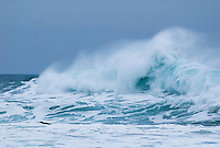 """""""CANNON BEACH WAVES""""<br /> <br /> Gorgeous and enormous spindrift waves breaking at Cannon Beach on the Oregon coast during a winter storm.<br /> <br /> <br /> 1) 42 X 30 canvas print $3,500<br /> (1) 36 X 24 canvas print $2,800<br /> <br /> 16 x 12.5 signed paper print<br /> 1/50 $95.00 The original giclee on canvas is available for purchase. Contact Kinsey Barnard for more information.<br /> <br /> Limited edition (50) fine art paper prints are available directly from this site."""