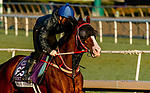 October 27, 2019 : Breeders' Cup Dirt Mile entrant Blue Chipper, trained by Kim Young Kwan, exercises in preparation for the Breeders' Cup World Championships at Santa Anita Park in Arcadia, California on October 27, 2019. John Voorhees/Eclipse Sportswire/Breeders' Cup/CSM