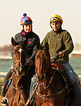 Aruna, trained by Graham Motion and to be ridden by Ramon Dominguez., exercises in preparation for the 2011 Breeders' Cup at Churchill Downs on.October 30, 2011.