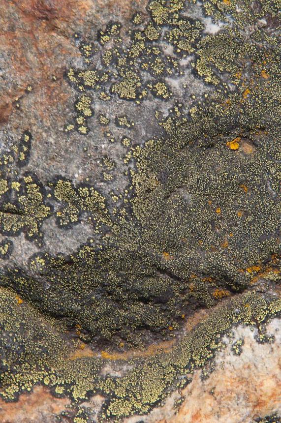 Rock Face with Lichen, North Cascades National Park, Washington, US