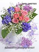 Alfredo, FLOWERS, BLUMEN, FLORES, photos+++++,BRTOLMN27921,#f#, EVERYDAY