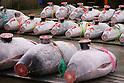 First tuna auction of 2018 at Tsukiji fish market