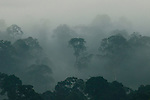 Lowland rainforest shrouded in clouds at sunrise, Danum Valley Conservation Area, Sabah, Borneo, Malaysia