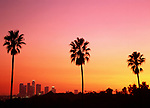 Silhouetted palm trees at sunset over looking Los Angeles California