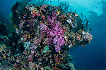 Colorful Reef, Misool, Indonesia