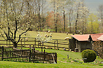 Outbuilding, vegetable garden and pasture with sheep. Walnut Acres Farm.