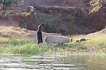 Man Making Dug Out Canoe