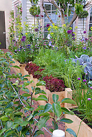 Beautiful raised bed den, Vegetables, carrots, peas, cabbages, flowers, irises, house, in lush variety growing together intermixed, fig tree, ornamental onions, blue flowers, purple flowers, red lettuce, edible landscaping aka Cavalo Nero kale