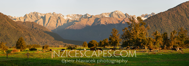Farmland in Whataroa with Southern Alps background at sunset, South Westland, West Coast, New Zealand, NZ