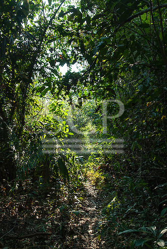 Aldeia Baú, Para State, Brazil. Path through the forest.