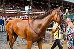 SARATOGA SPRINGS, NEW YORK - AUG 26:  Lady Eli #1, ridden by Irad Ortiz Jr., wins the Balston Spa at  Saratoga Race Course on August 26, 2017 in Saratoga Springs, New York.(Photo by Sue Kawczynski/Eclipse Sportswire/Getty Images)