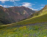 San Juan Mountains, CO<br /> San Juan range from alpine meadow of American Basin