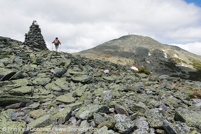 A hiker on Davis Path with Mount Washington in the background in Sargent's Purchase in the New Hampshire White Mountains on a cloudy summer day. Completed in 1845 by Nathaniel T. Davis, Davis Path was the third and longest bridle path built to the summit of Mount Washington. The path was in use until 1853-1854, and then it was neglected and became unusable. In 1910 it was reopened as a footpath.