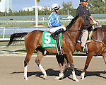 """Where's the Baby post parade. Point of Entry with John Velazquez wins the 30th running of the Kitten's Joy Gulfstream Turf Handicap (Grade 1) for 4-year olds & up, going 1 1/8 mile on the turf, at Gulfstream Park.  Trainer Claude """"Shug"""" McGaughey III.  Owner Phipps Stable"""