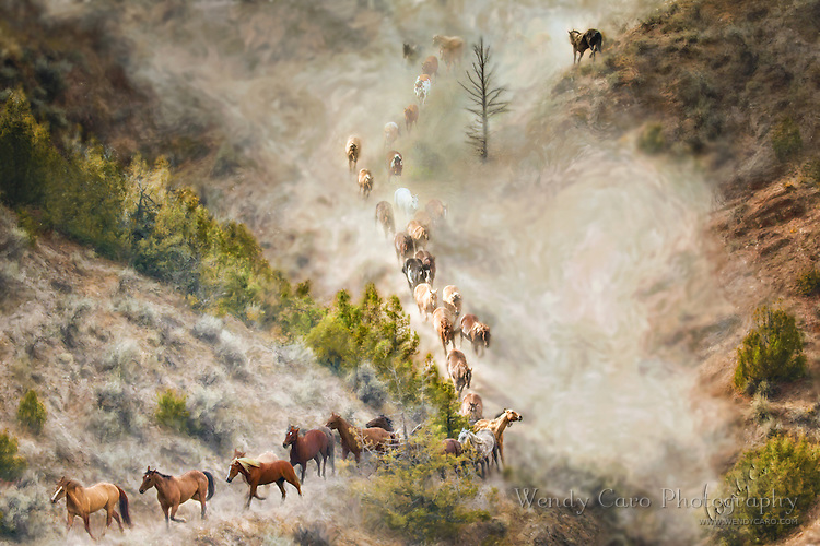 Herd of horses galloping down a dust-filled ravine, sidelit