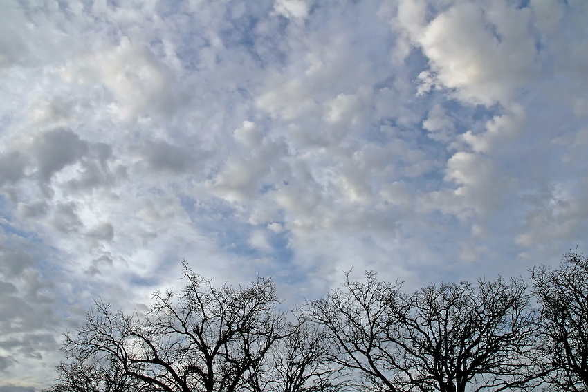 A cloud formation somewhere between cumulus & cirrocumulus.