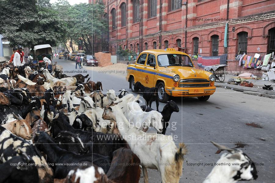 INDIA Westbengal, Kolkata, yellow HM Ambassador cab and goat herd on the road / INDIEN, Westbengalen, Kolkata, gelbes Ambassador Taxi und Ziegenherde auf der Strasse
