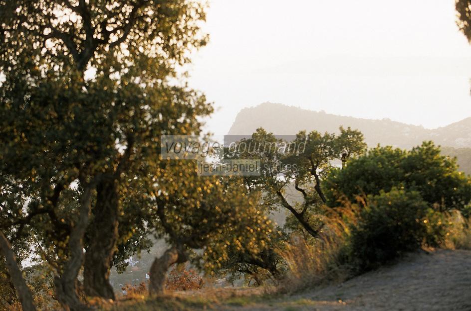 Europe/Provence-Alpes-Côte d'Azur/83/Var/Forêt des Maures: Vue sur le Cap Nègre depuis la route forestière privée des Crètes