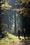 DEU, Deutschland, Bayern, Niederbayern, Naturpark Bayerischer Wald, Herbstlandschaft, Waldweg, Paar wandert | DEU, Germany, Bavaria, Lower-Bavaria, Nature Park Bavarian Forest, autumn landscape, wood, forest, couple hiking