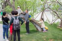 Yangzhou, Jiangsu, China.  Chinese family Taking Cell Phone Photos in the Slender West Lake Park.