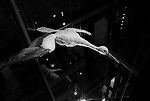 """""""The Great Escape""""<br /> Egret Display<br /> Museum of Natural History<br /> Paris, France<br /> From the """"Captivity"""" series<br /> © Thierry Gourjon-Bieltvedt"""