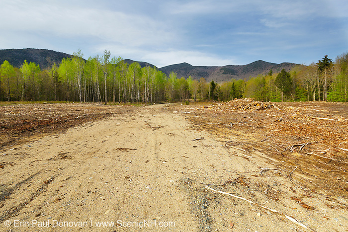 Landing area of the Kanc 7 timber harvest project in the area of Forest Road 510 along the Kancamagus Scenic Byway (route 112) in the White Mountains, New Hampshire.