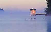On a misty August morning Canada Geese paddle by a well-known channel landmark at Ruissalo Island in Turku, Finland.