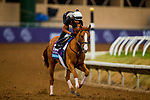 DEL MAR, CA - NOVEMBER 01:   Good Magic, owned by eFive Racing Thoroughbreds & Stonestreet Stables, LLC and trained by Chad C. Brown, exercises in preparation for Sentient Jet Breeders' Cup Juvenile at Del Mar Thoroughbred Club on November 01, 2017 in Del Mar, California. (Photo by Alex Evers/Eclipse Sportswire/Breeders Cup)