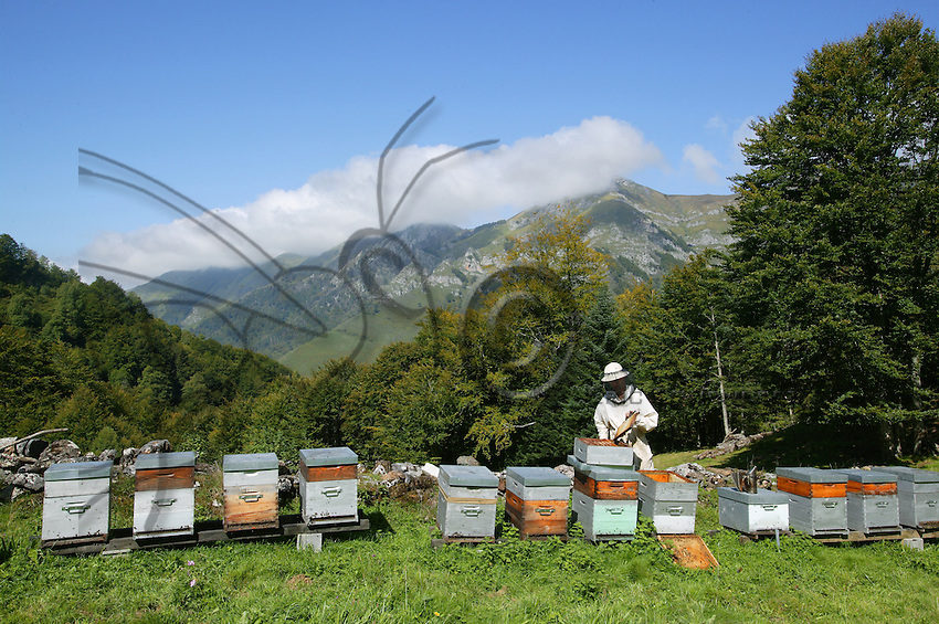 An apiary in the Pyrenees (FRANCE). The hives are taken into the mountains in May, and brought down to the lower elevations again in September. Rhododendron and heather are the principal sources for mono-floral honeys.
