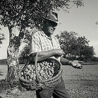 Europe/France/Midi-Pyrénées/46/Lot/Thégra: Mr Jean Chartroux et son chien Justin ramasse ses noix du Quercy [Non destiné à un usage publicitaire - Not intended for an advertising use]<br /> PHOTO D'ARCHIVES // ARCHIVAL IMAGES<br /> FRANCE 1990