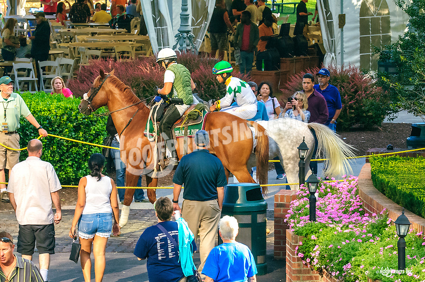 Lady Haha The Buzz Brauninger Arabian Distaff (grade 1) at Delaware Park on 9/2/16