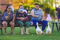 wildlife ducks coexist with people in wetland, Pato. (Photo: Luis Gutierrez / NortePhoto.com).<br /> <br /> patos de vida silvestre conviven con personas en humedal, Pato. (Photo: Luis Gutierrez / NortePhoto.com).