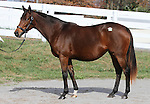 Hip 374 Changing Skies, consigned by Hill n'Dale..November 04, 2012.
