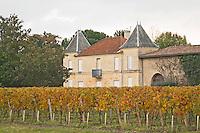 Vineyard. Chateau XXXX. Saint Emilion, Bordeaux, France