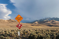 "A battered road sign proclaims ""Pavement Ends"" while a panoply of nature unfolds behind."