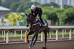 DEC 11,2015: Preferment ,trained by Chris Waller,exercises in preparation for the Hong Kong Vase at Sha Tin in New Territories,Hong Kong. Kazushi Ishida/ESW/CSM
