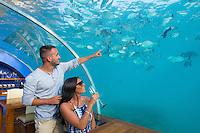 Maldives, Rangali Island. Conrad Hilton Resort. Couple at Ithaa underwater restaurant. (MR)