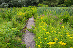 The Meadow at the Arnold Arboretum in Jamaica Plain, Boston, Massachusetts, USA