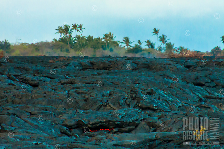 Lava glows in the foreground as lava surface flow slowly moves away from distant palm trees, Hawai'i Volcanoes National Park, Kalapana Big Island.