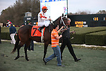 20 February 2009: Crider Before The Southwest at Oaklawn in Hot Springs, Arkansas