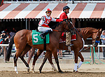 Newspaperofrecord (no. 5) wins Race 5, Aug. 19, 2018 at the Saratoga Race Course, Saratoga Springs, NY.  Ridden by  Irad Ortiz, Jr., and trained by Chad Brown  Newspaperofrecord finished 6 3/4 lengths in front of Sister Kitten (no. 1).  (Bruce Dudek/Eclipse Sportswire)