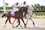 Gantry on post parade for The Smile Sprint Handicap (G2), Calder Race Course, Miami Gardens Florida. 07-07-2012.  Arron Haggart/Eclipse Sportswire.
